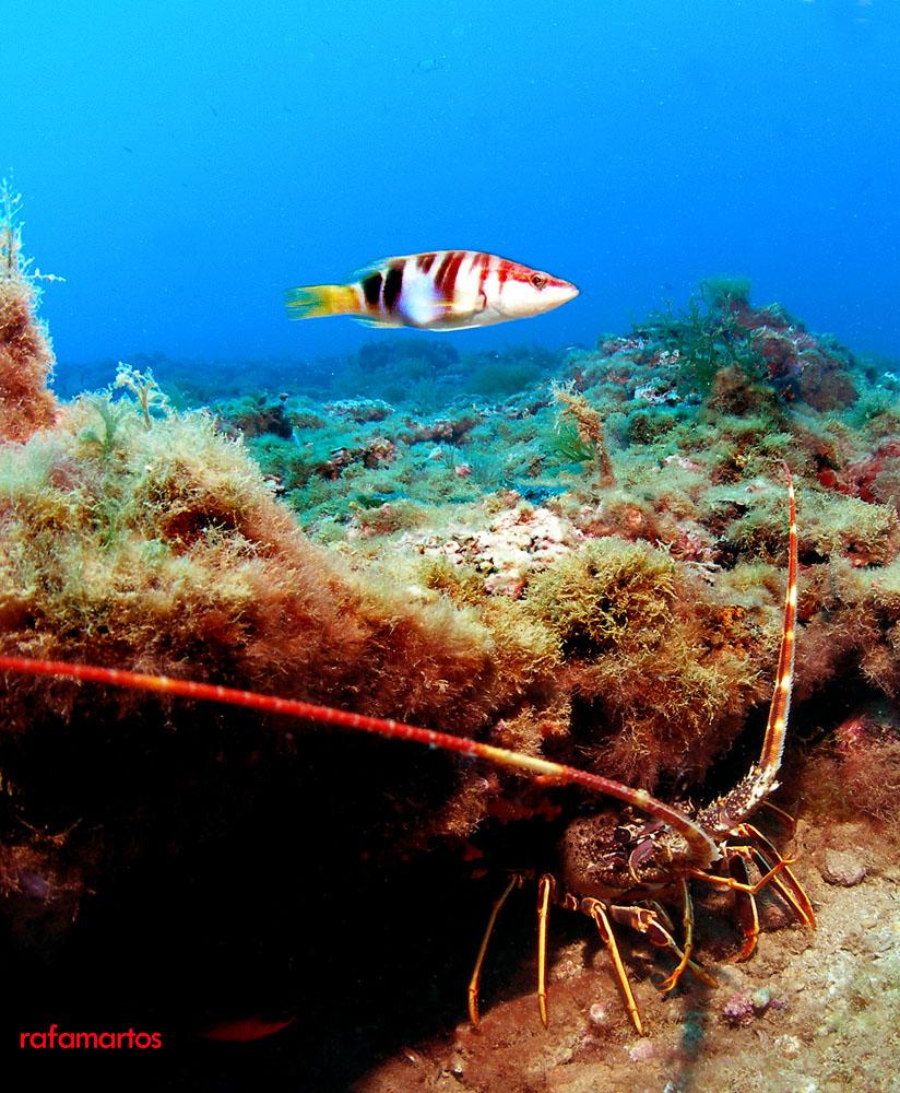 Bucear en Cullera. | Buceo y Snorkel