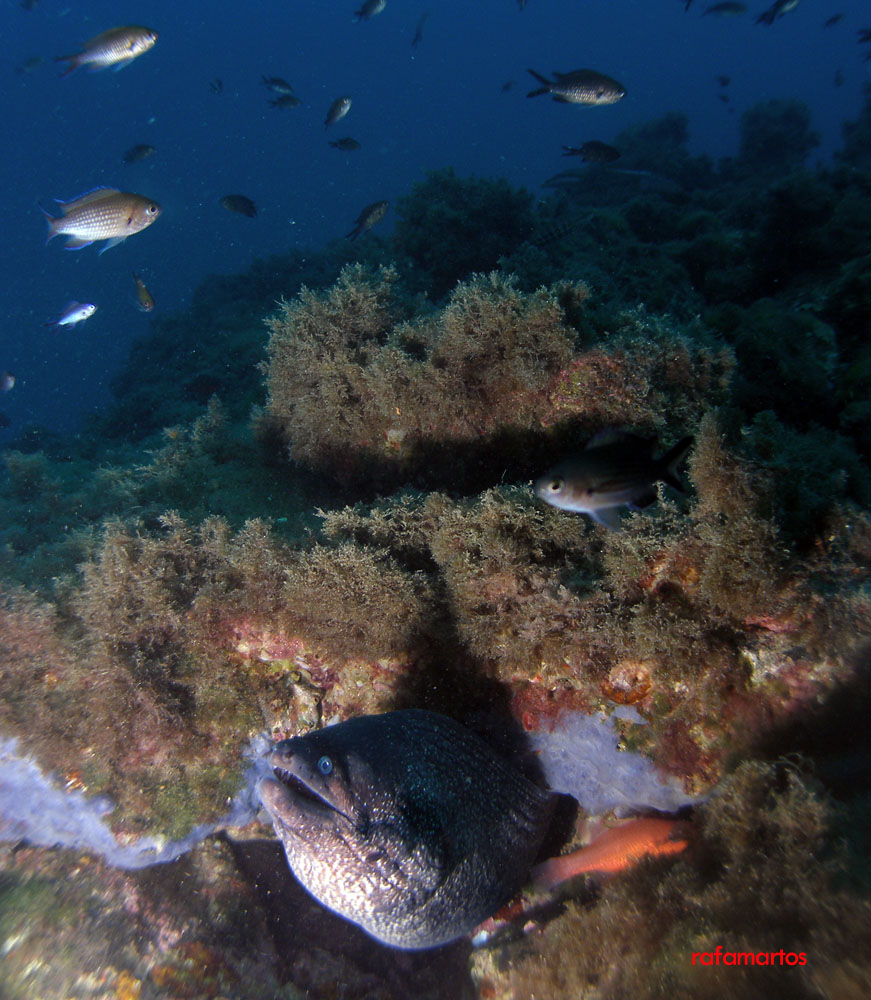 Buceo en Murcia, Cueva de la Virgen (Calabardina)   Buceo y Snorkel