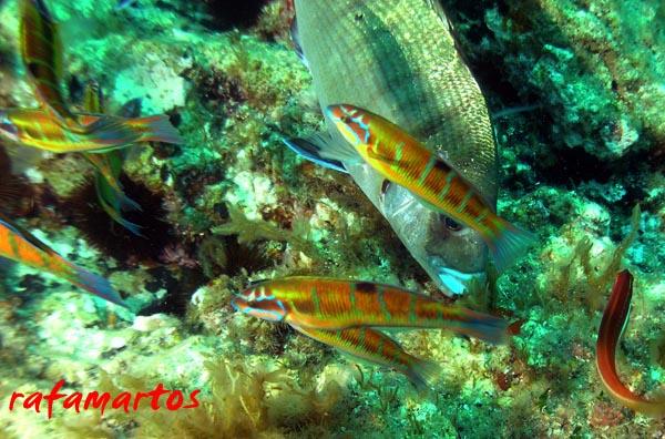 Snorkel en la Cala Almadrava de Benidorm   Buceo y Snorkel
