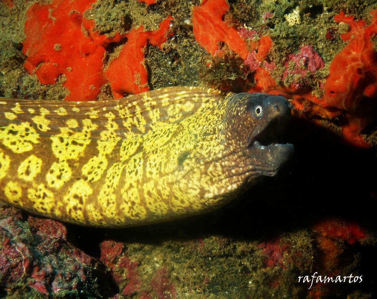 Un pez llamado Morena | Buceo y Snorkel