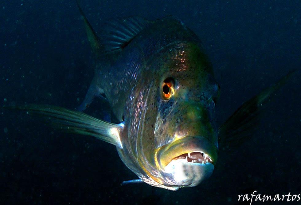 Feeding o el circo con la naturaleza | Buceo y Snorkel