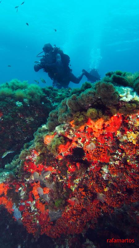 Sumergidos en la isla de Tabarca | Buceo y Snorkel