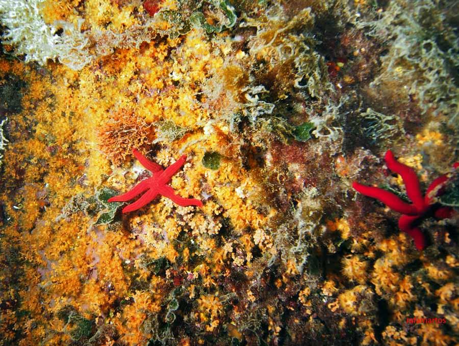 Buceo en Moraira | Buceo y Snorkel
