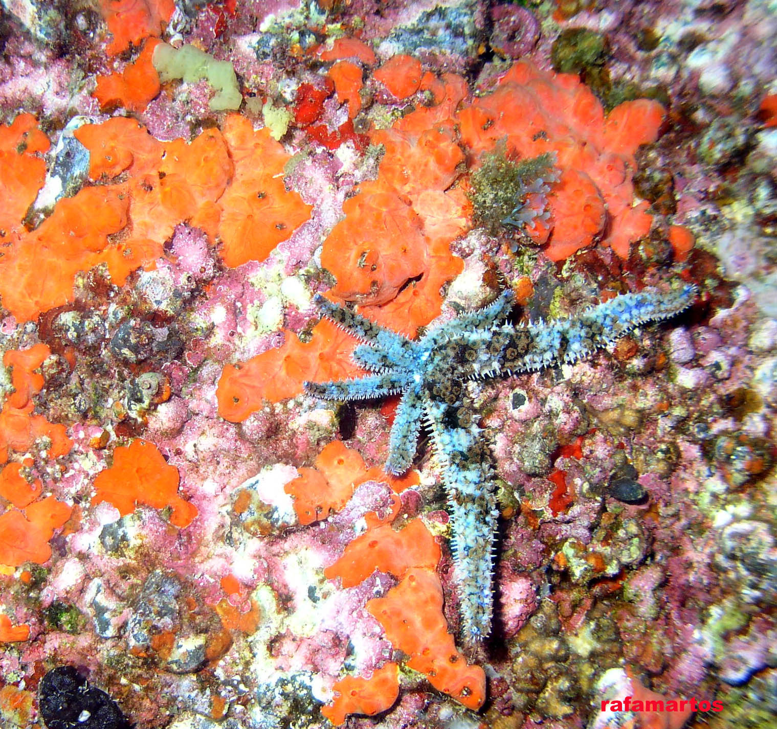 Una Navidad de estrellas | Buceo y Snorkel