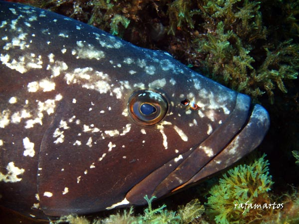 Buceo en la isla Grossa de Columbretes   Buceo y Snorkel
