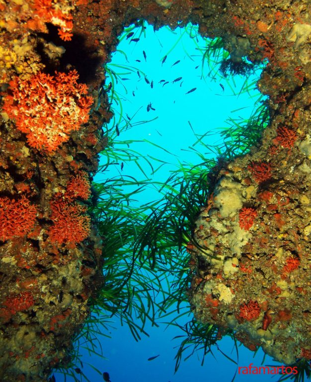 Buceo en Ses Coves de Ibiza