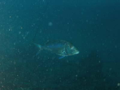 El buceo en aguas túrbias
