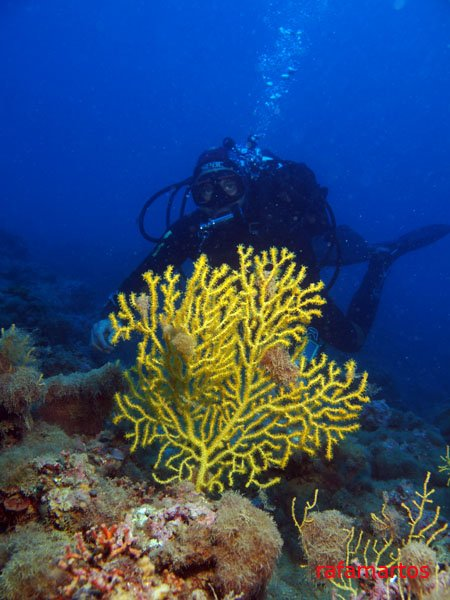 buceo en las gorgonias