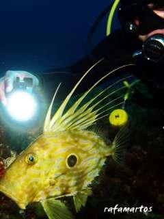pez de san pedro