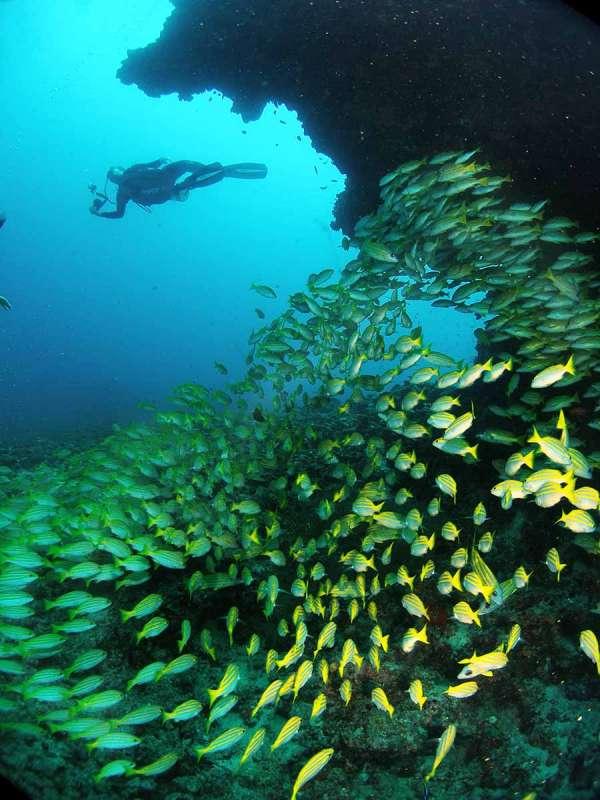 vida marina en Maldivas