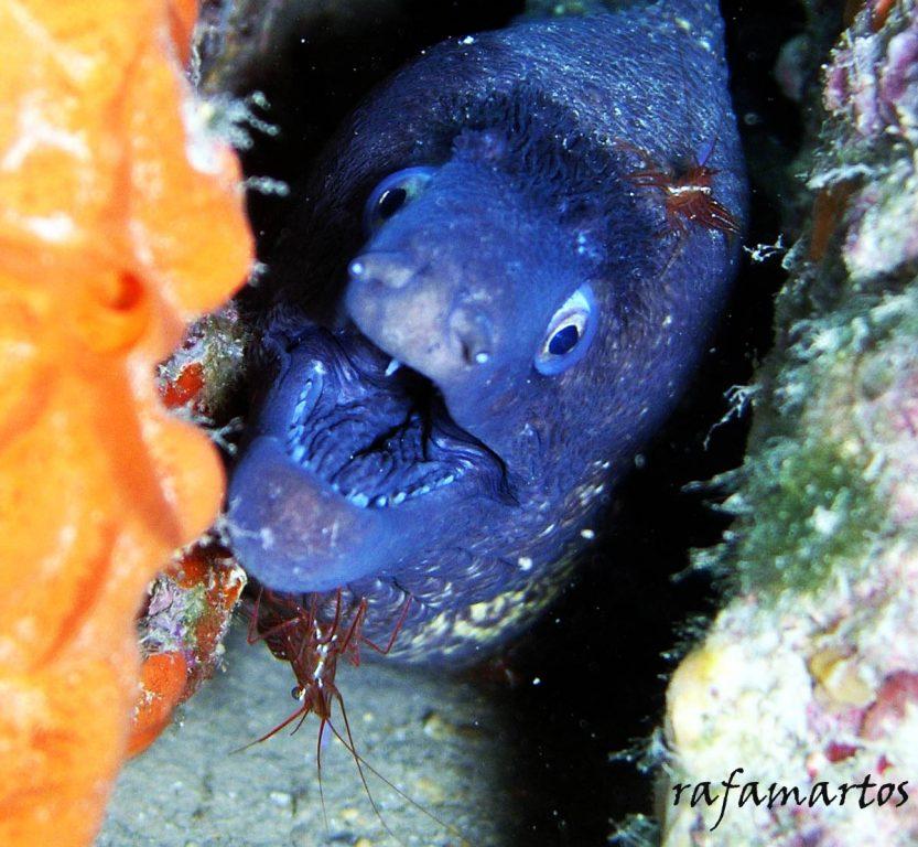 Un pez llamado Morena