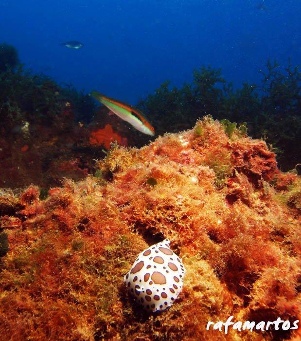 Buceo en Cullera, el Mareny Blau | Buceo y Snorkel