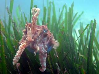 documental posidonia Obesmar