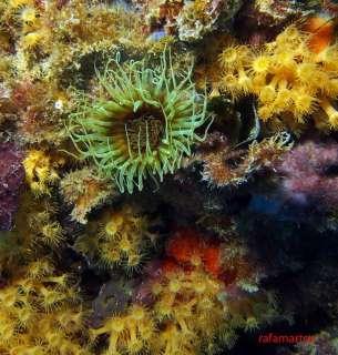 punta garbi Isla Benidorm