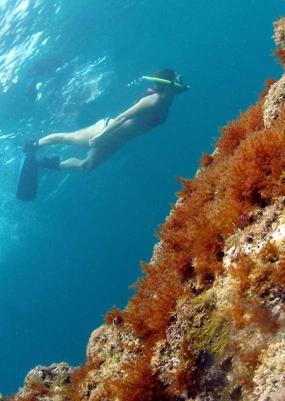 snorkel 055b